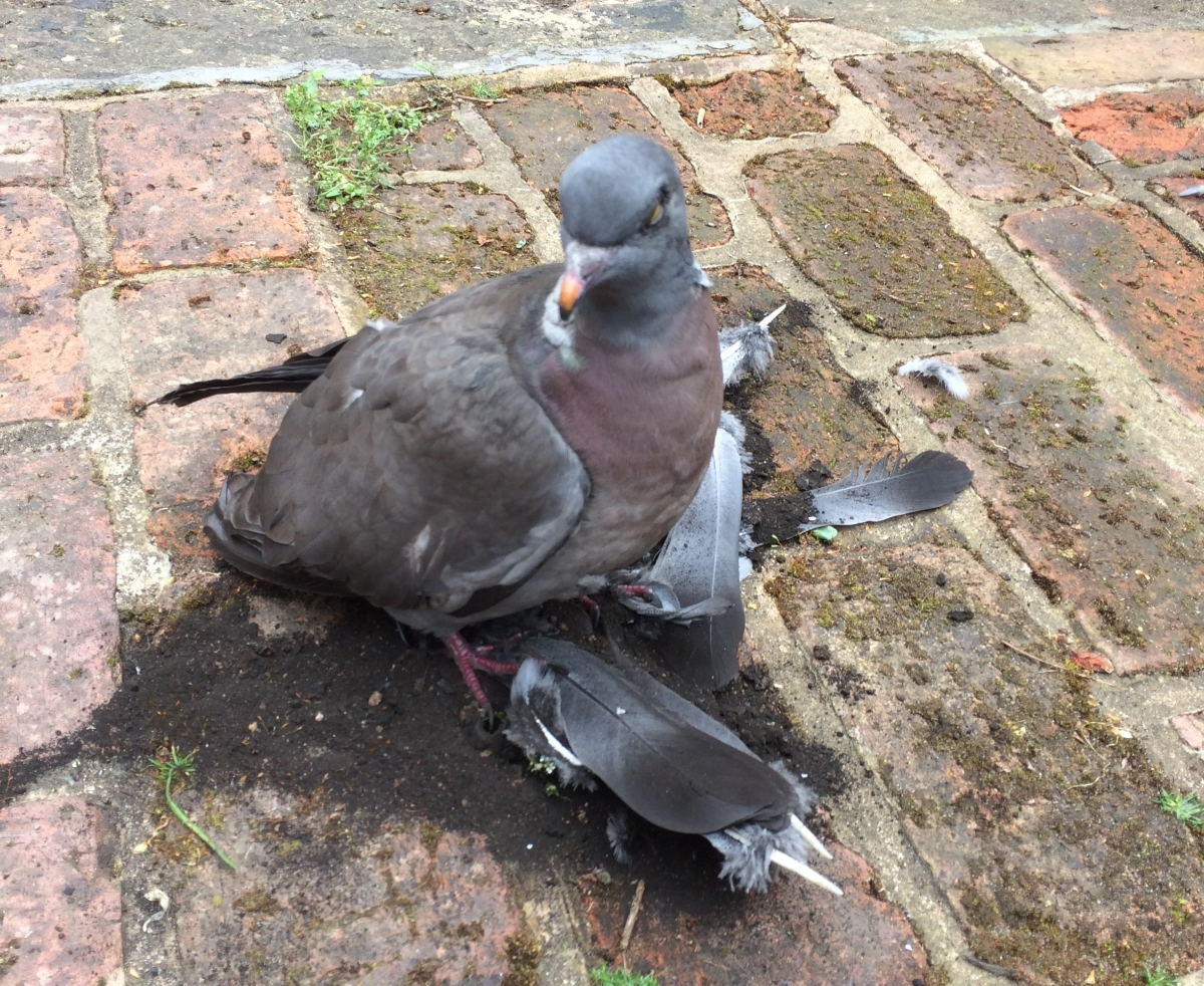 Bird Trapped In Chimney What You Should Do Mr Soot